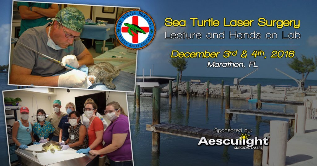 sea-turtle-lecture-and-lab-v3